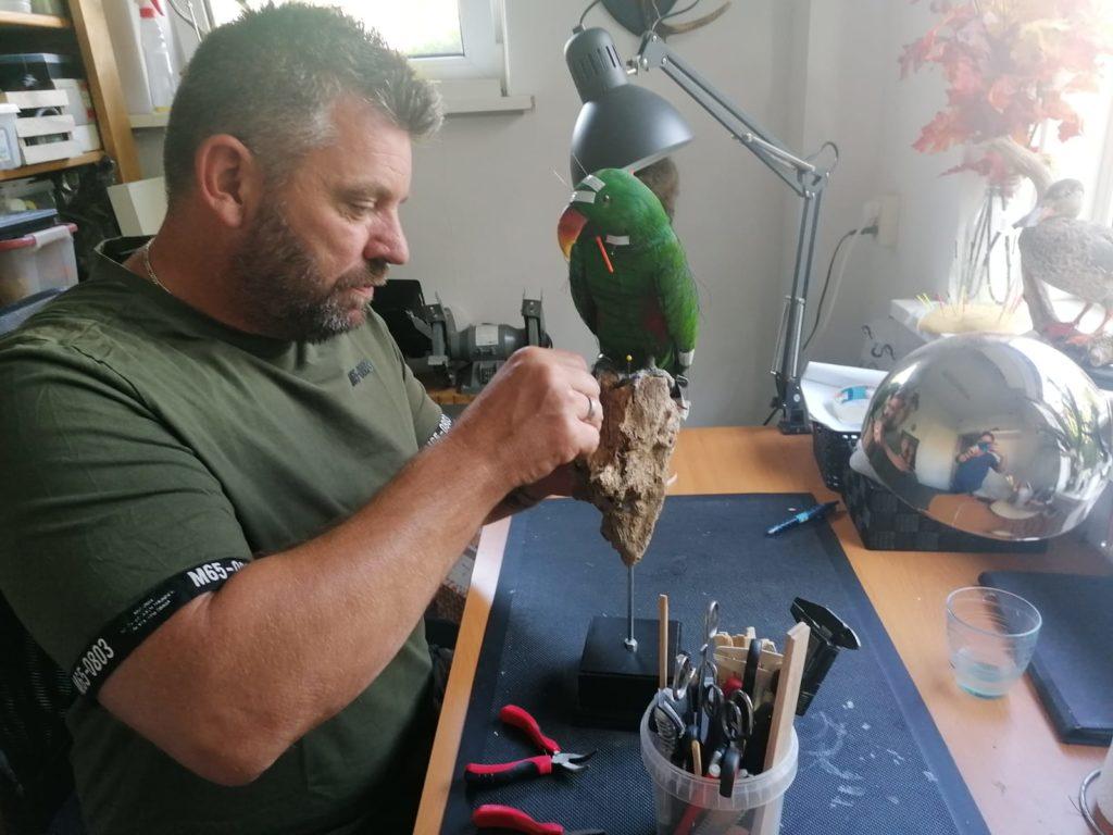 Preparateur Broek IJmuiden Taxidermist opzetten vogels dieren prepareren