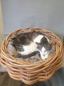 Opgezette kat